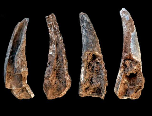 Krebse genutzt vom Neandertaler