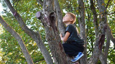 Studie: Verbundenheit zur Natur macht Kinder glücklicher