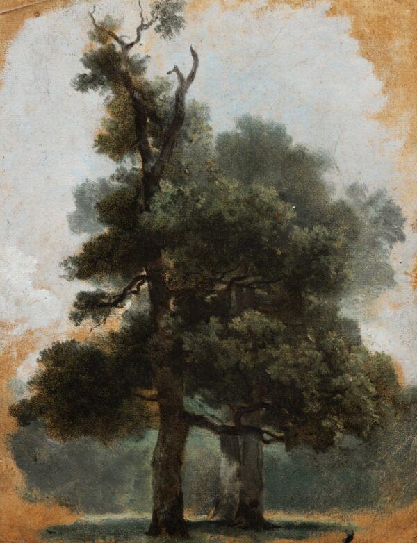 "Naturgetreu gezeichnet ""Studie eines Baumes im Bois de Boulogne"", um 1790, von Pierre-Henri de Valenciennes."