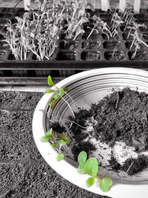 Kartoffeln und Co. für den eigenen Hausgarten