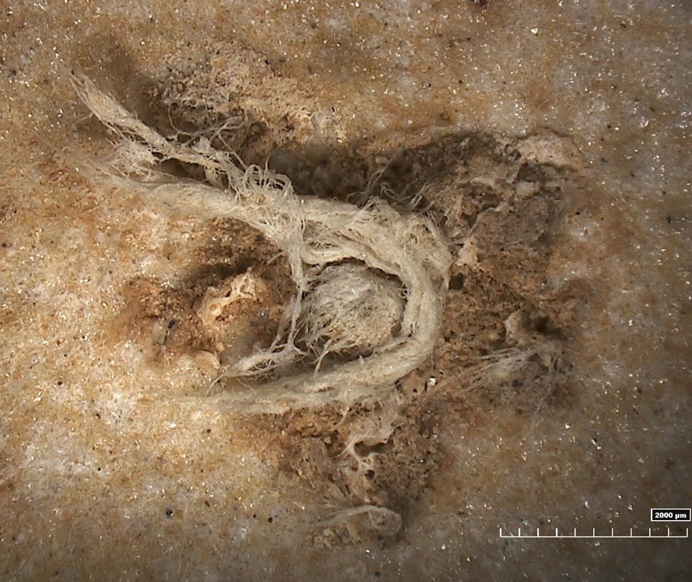 Neandertaler drehten Stricke: Mehr als 40.000 Jahre alte Schnurreste an Steinwerkzeug entdeckt