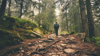 An den Wald – Von Christian Morgenstern