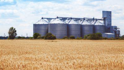 Hamsterkäufe an Getreidemärkten: Immer mehr bedeutende Weizen-Erzeugerländer planen Exportstopps