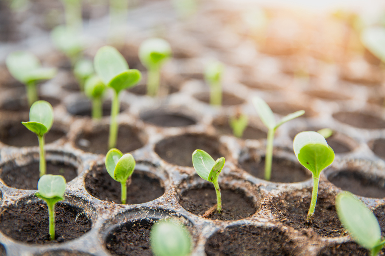 Selbstversorgung aus dem Hausgarten – Erste Aussaaten, Kartoffelanbau und eigene Jungpflanzen