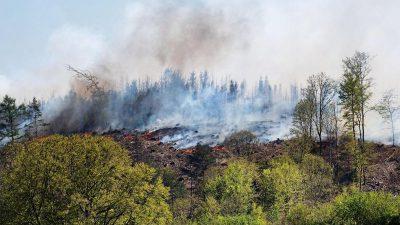 Waldbrände machen Feuerwehren zu schaffen