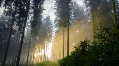 Morgendämmerung – Von Joseph Freiherr von Eichendorff