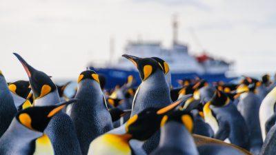 """Pinguin-Guano macht Forscher high – Studie weist """"hohe Mengen"""" Lachgas nach"""