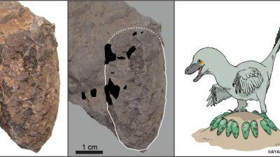 Fenster in die Kreidezeit: Winzige Dinosaurier-Eier geben Einblick in urzeitliches Ökosystem