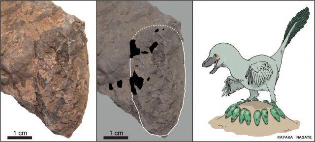 Dinosauriereier aus Japan