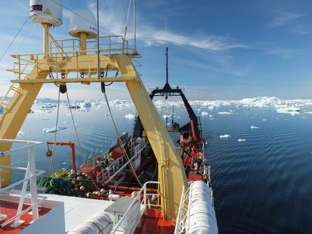 Erforschung der Weichkorallen vor Grönland