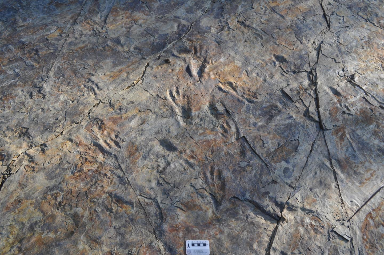 Zweibeinige Krokodile wanderten einst durch kreidezeitliches Südkorea