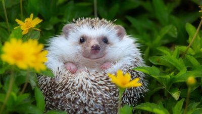 Lebensgefahr für Wild- und Heimtiere durch Mähroboter: Tipps für einen tierfreundlichen Garten
