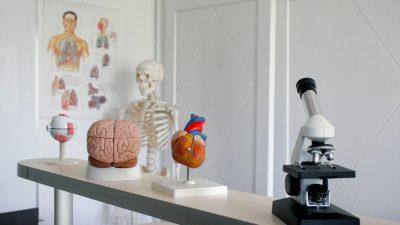Bio-Unterricht mal anders: Lehrerin schlüpft in Anatomie-Bodysuit