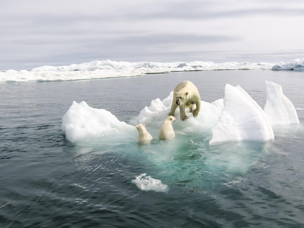 """Umweltorganisationen verlieren in Norwegen """"historischen"""" Prozess gegen Staat"""