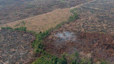 Brasilien verbietet Abbrennen in Amazonien für 120 Tage