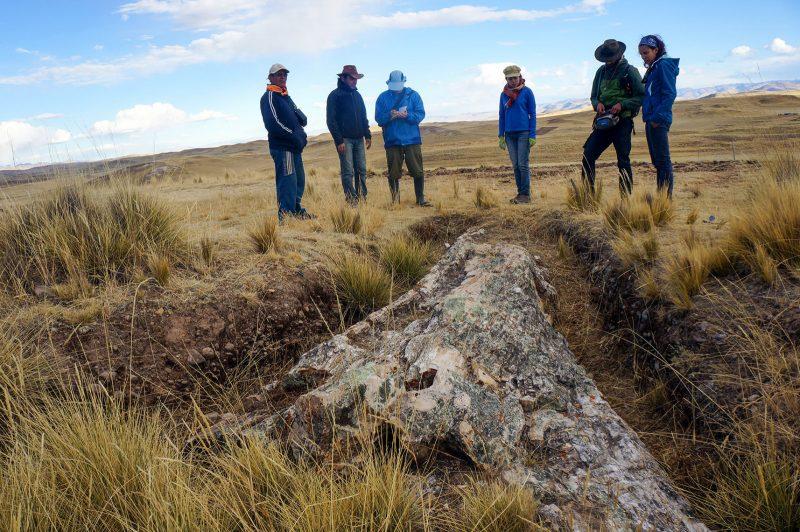 Fossiler Mega-Baum zeigt: Anden-Plateau war feuchter als Klimamodelle zulassen