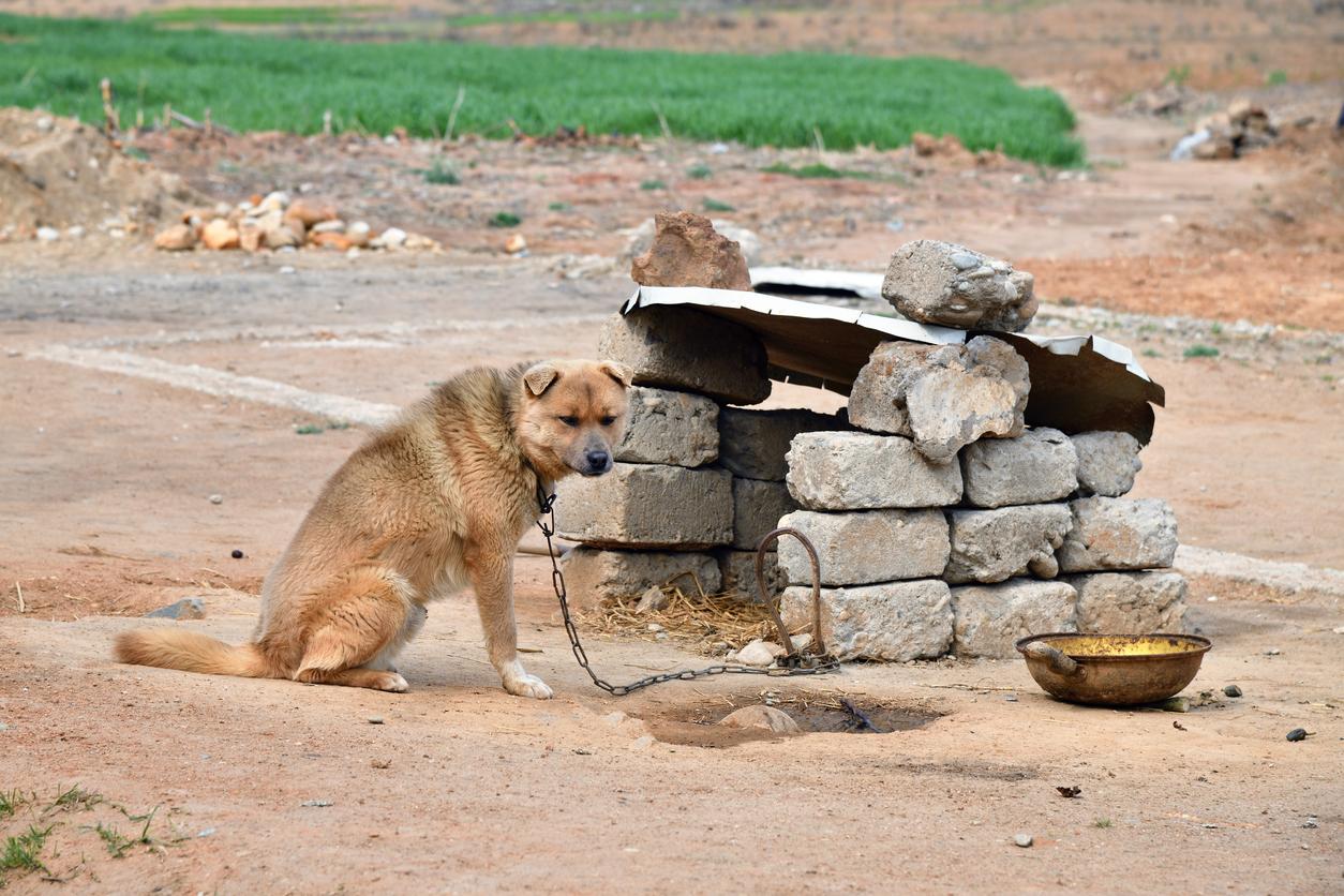 Nordkorea: Hunde zu halten wird illegal – Behörden sollen Vierbeiner als Nahrungsreserve einsammeln