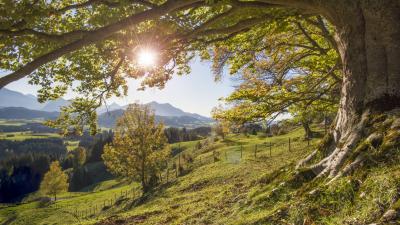 Von guten Mächten wunderbar geborgen – Von Dietrich Bonhoeffer