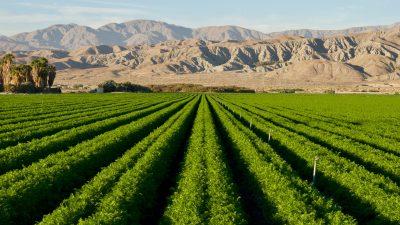 Melonen aus der Wüste: Technik aus Norwegen macht Wüsten binnen Stunden fruchtbar