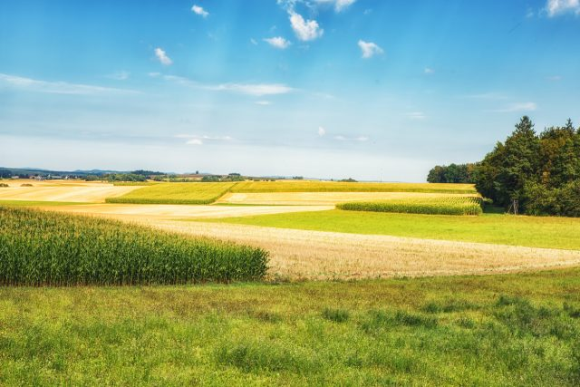 Ackerflächen zu Wohngebiet: Stadt Wiesbaden will verkaufsunwilligen Bauern auf die Sprünge helfen
