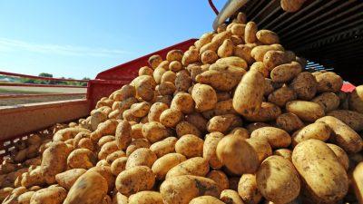 Höfesterben: Verantwortung der Lebensmittelindustrie und schwache Verhandlungsposition der Landwirte (Teil 2)
