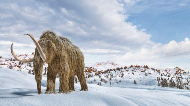 Mammut: Riesen der Eiszeit