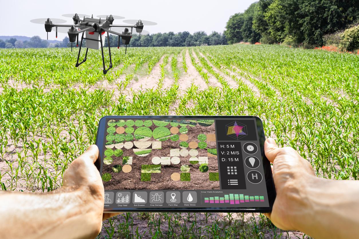 Dramatisches Höfesterben in der deutschen Landwirtschaft – Ursachen und mögliche Auswege (Teil 1)