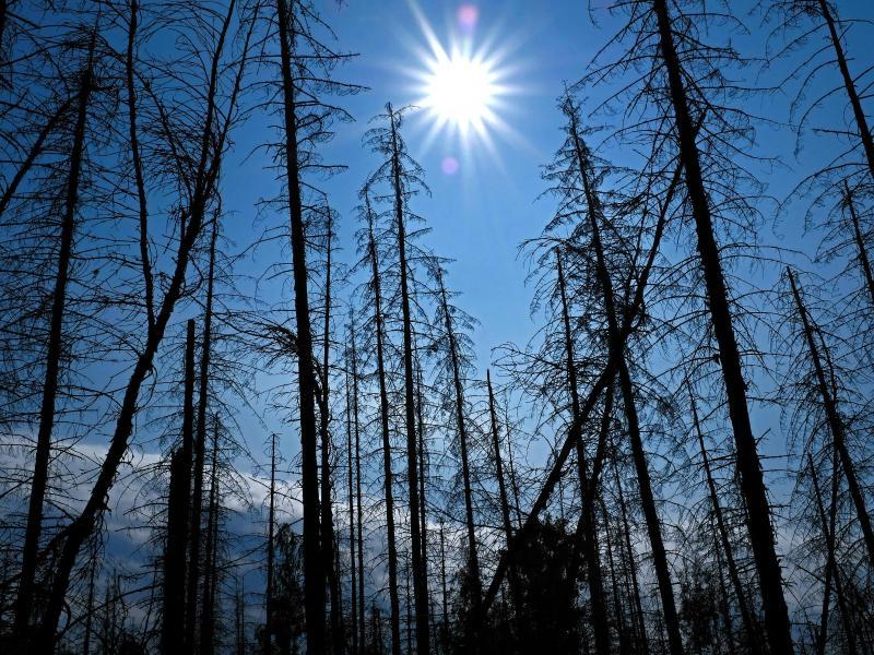 IPCC-Klima-Modell nicht aktuell: Worst-Case-Emissionen steigen langsamer als prognostiziert