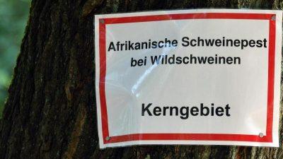 Afrikanische Schweinepest: Brandenburg errichtet festen Zaun an Grenze zu Polen