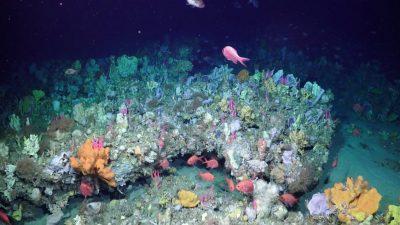 Unbekannte Ozeane: Forscher entdecken 500 Meter hohes Korallenriff im Great Barrier Reef