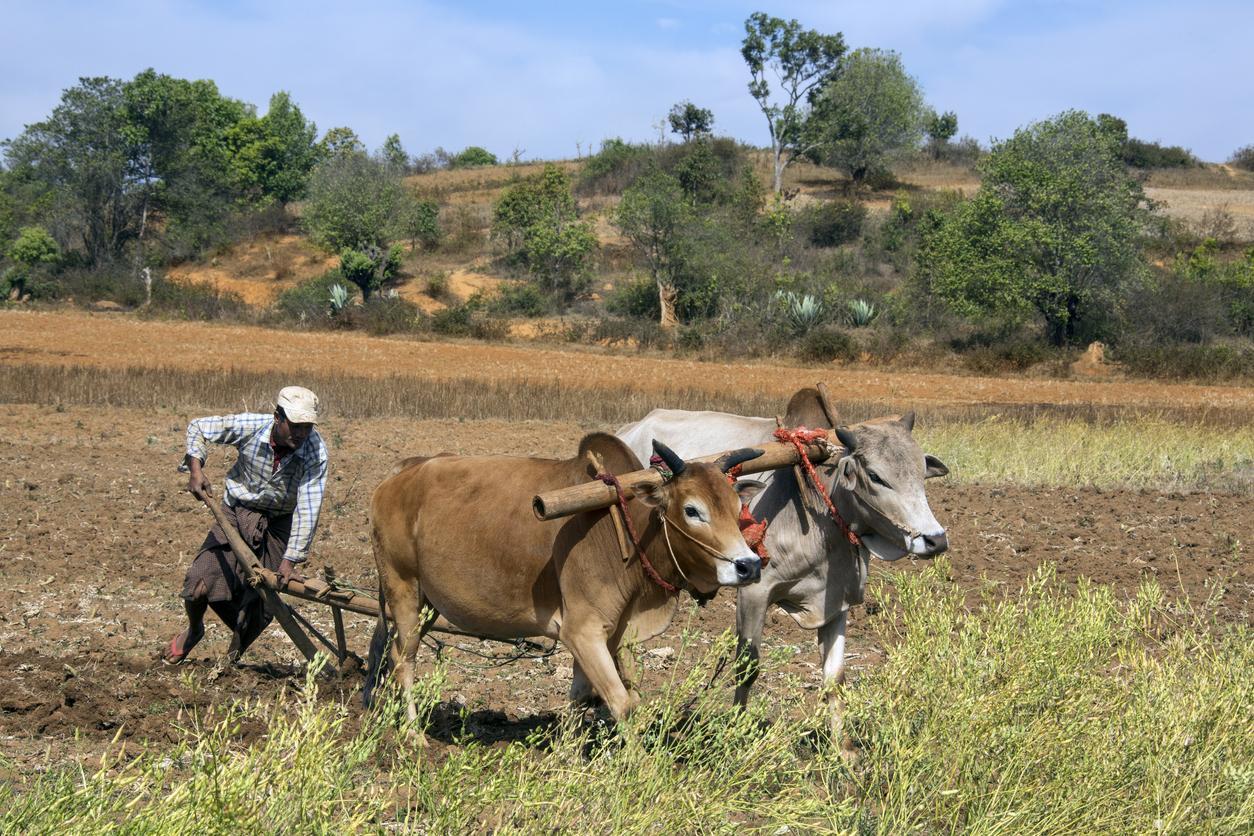 WWF-Planspiel simulierte globale Ernährungskrise 2020 bis 2030 – mit Kohlenstoffsteuer und Fleischsteuer in der EU