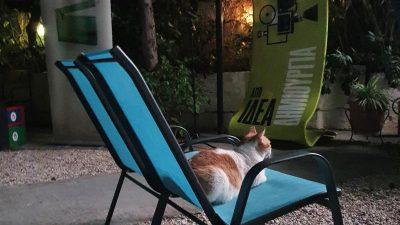 Katzen retten schlafende Besitzer bei Laubenbrand