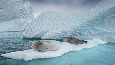 Keine neuen Schutzgebiete in der Antarktis