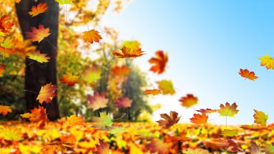 Herbst im Fluss – Von Joachim Ringelnatz