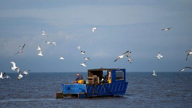 Streit um Fischfangrechte: Paris droht in Brexit-Handelsabkommen-Verhandlungen mit Veto