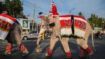Weihnachtselefanten verteilen Gesichtsmasken in Thailand