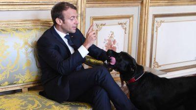 Macrons Hund Nemo sendet tierische Weihnachtsgrüße aus dem Elysée-Palast