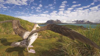 'Die Schönheit der Vögel' 130 Jahre einzigartige Vogelfotografie bei National Geographics