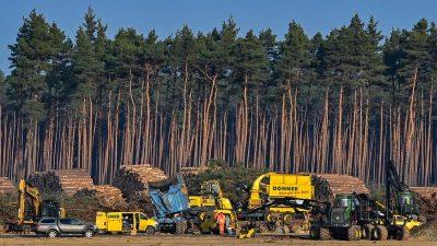 Gericht erlaubt weitere Waldrodung auf Tesla-Baustelle