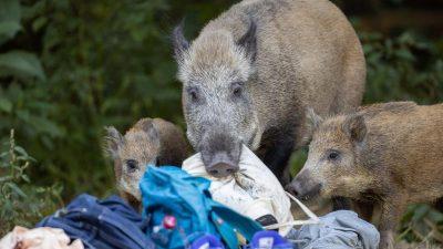 Pfoten, Tiere, Sensationen: Tierische Momente 2020