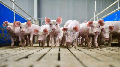 """Landwirtschaftliche Betriebe in Deutschland """"so groß wie nie"""""""