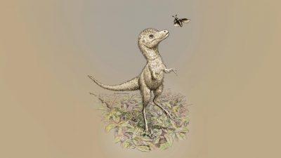 Border Collie große T. rex-Babys, 15 Meter lange Reiher und über den Kopf wachsende Super-Nasen