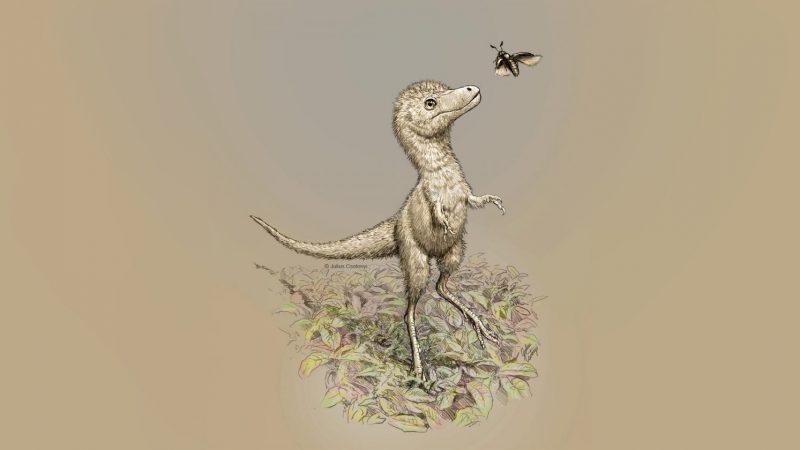 Dino-News: Baby-Tyrannosaurier so groß wie ein Border Collie