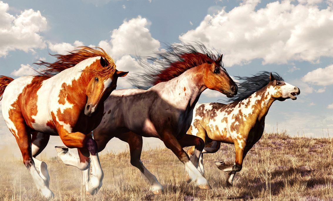 Klassik des Tages: Leichte Kavallerie