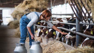 Bauernverband: Baurecht verhindert bessere Tierhaltung