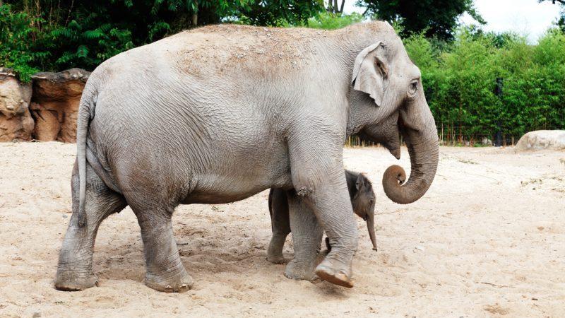 """Tierpfleger von Elefantin getötet: """"Die Kraft des Schlags war gewaltig"""""""