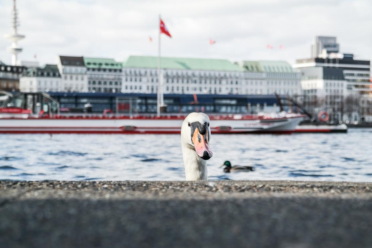 Hamburg führt an Wochenenden Maskenpflicht in besonders beliebten Parks ein