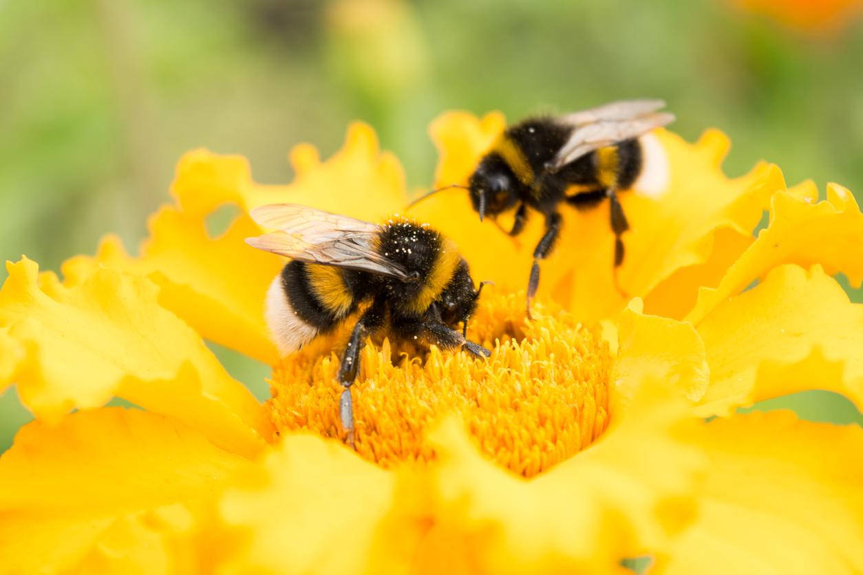FDP fordert Forschung zu Insektenrückgang