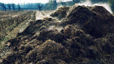 Verbotene Misthaufen und warum Deutschlands Insekten-, Vogel- und Bauernsterben damit zu tun hat