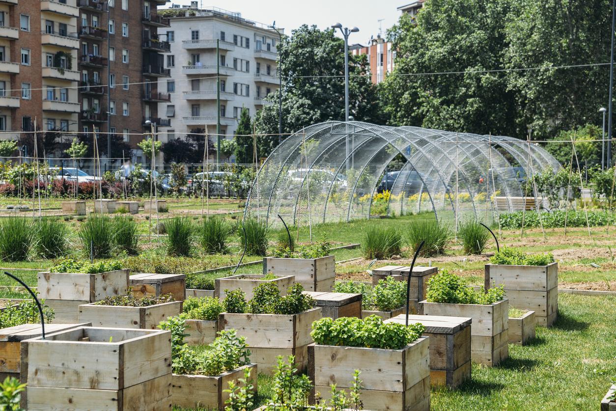 Rund ein Viertel der Großstadt-Fläche wird landwirtschaftlich genutzt